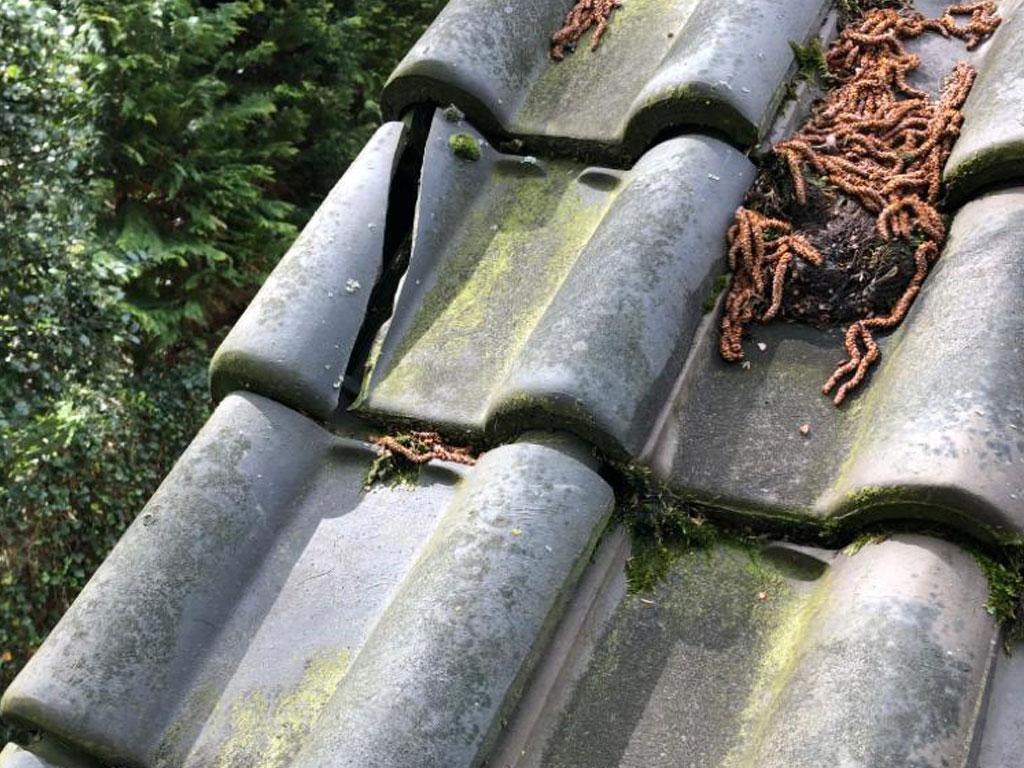 een hellend dak waarbij onderhoud aan het dak nodig is. In dit geval ter vervanging van dakpannen.